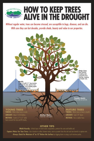 Poster of how to keep trees alive in the drought.